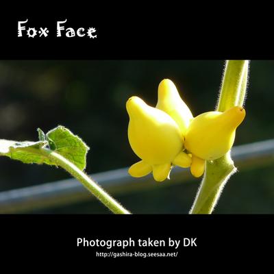 Fox_Face.jpg